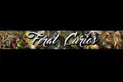 Feral Curios logo